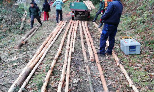Holzstangen holen 2019